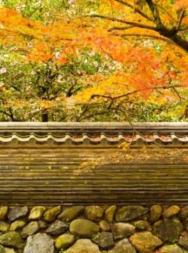 ブログ用写真秋バージョン