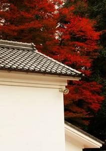 紅葉と漆喰6