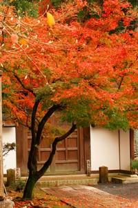 紅葉漆喰4